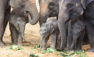 Kleine und große Elefanten