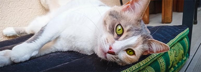 Hundebett und Katzenbett auf thailändisch