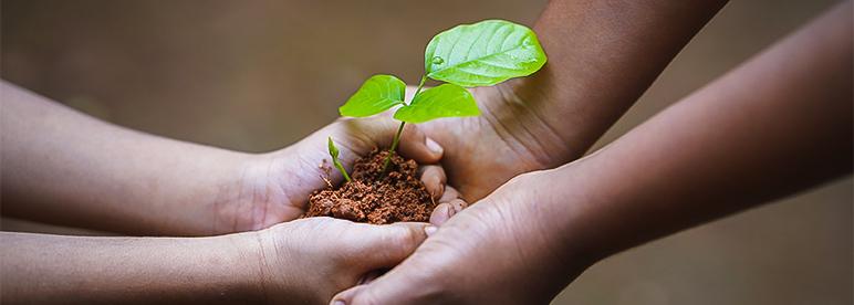 co2 Fussabdruck Pflanze zwei Hände Erde übergeben halten