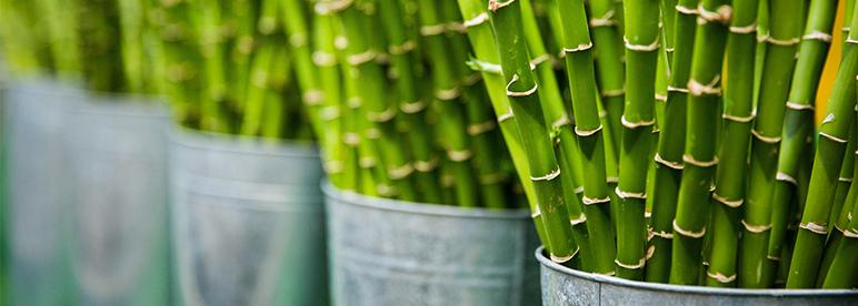 Asiatische Zimmerpflanzen: Dein Dschungel im Wohnzimmer